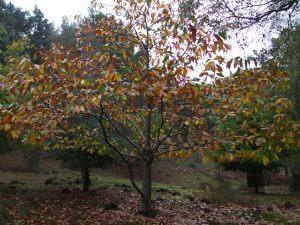 An autumnal Brownsea.